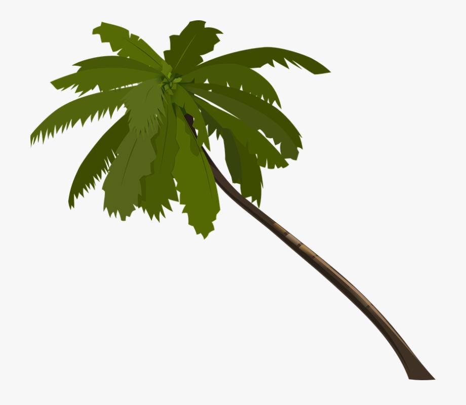 Transparent Cartoon Palm Tree.