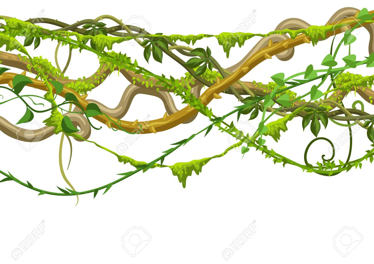 Twisted wild lianas branches banner. Jungle vines plants. Woody...