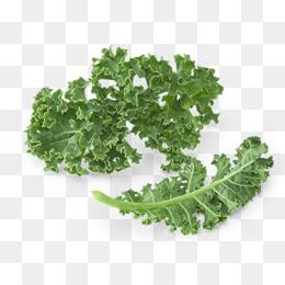 Kale Leaf PNG and Kale Leaf Transparent Clipart Free Download..