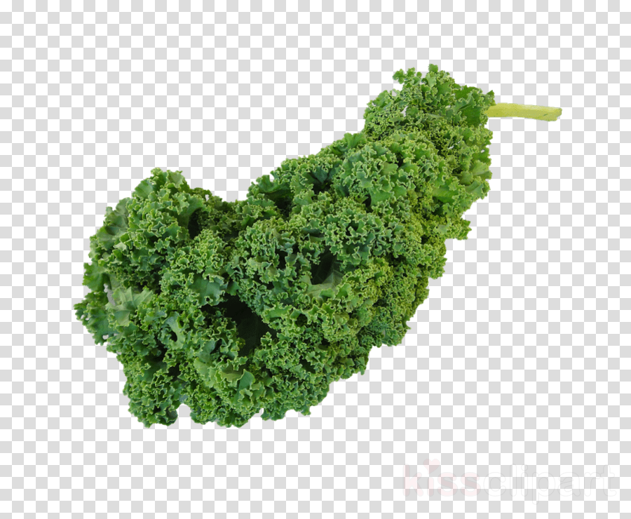 green leaf vegetable leaf plant kale clipart.