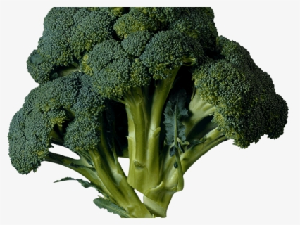 Free Kale Clip Art with No Background.
