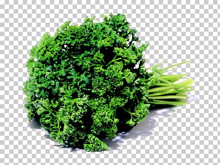 Parsley Leaf vegetable Karpas Herb, parsley PNG clipart.