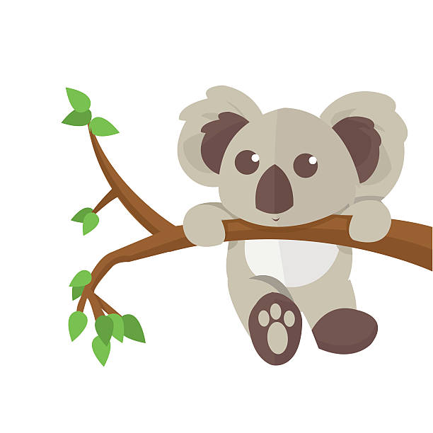 Top 60 Koala Clip Art Vector Graphics And Illustrations IStock.