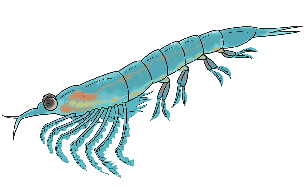 Northern Krill clipart. Free download..