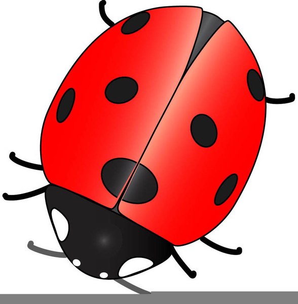 Animated Ladybird Clipart.