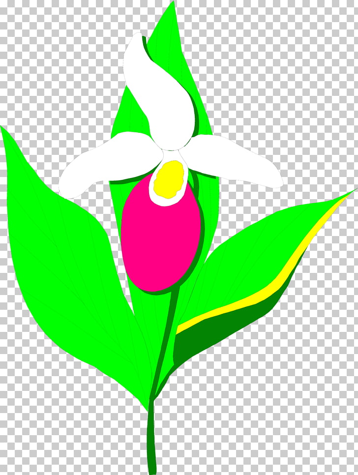 Stock photography Plant , Lady\'s Slipper Orchids PNG clipart.