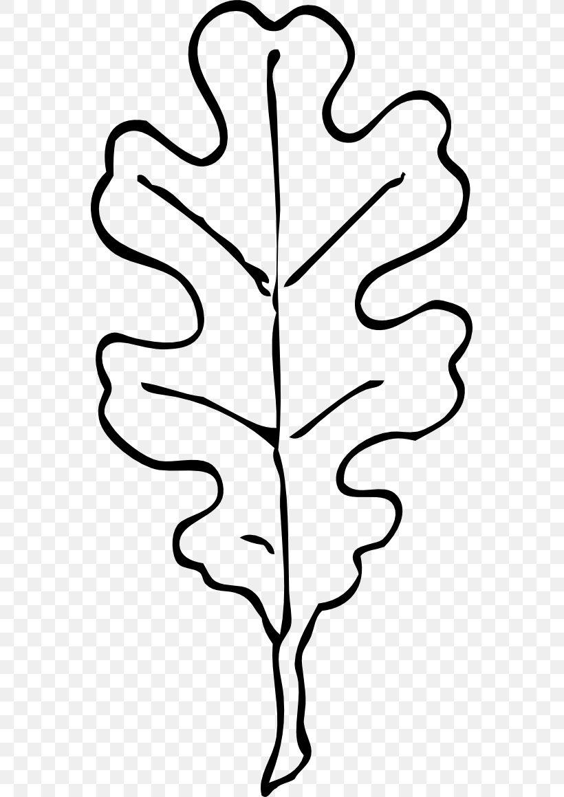 Leaf White Oak Swamp Spanish Oak Quercus Velutina Clip Art.