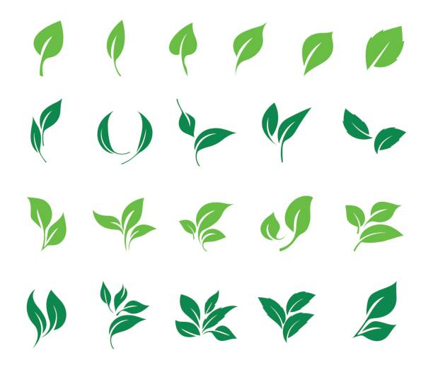 Best Leaf Illustrations, Royalty.