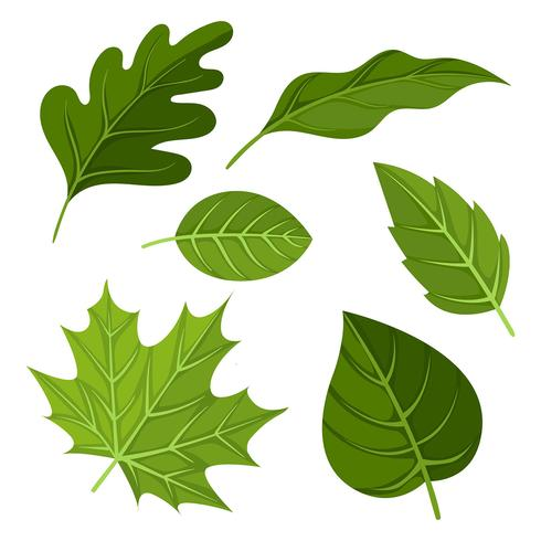 Green Leaves Clipart Set Vector.