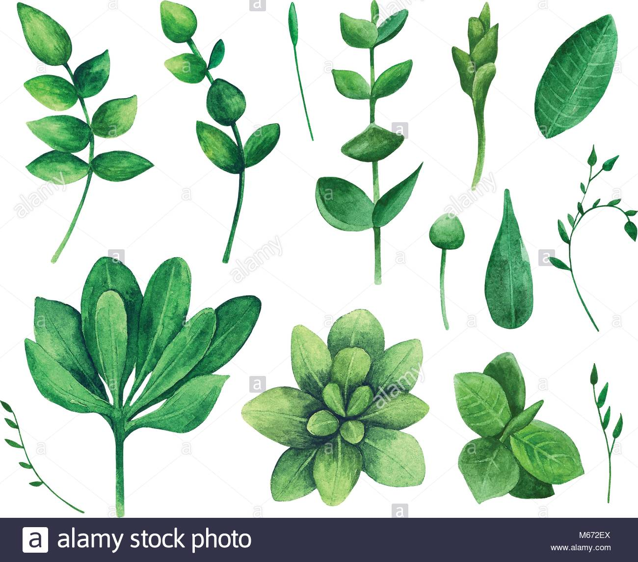 Watercolor green leaf. Nature vector clip art. Summer greenery Stock.