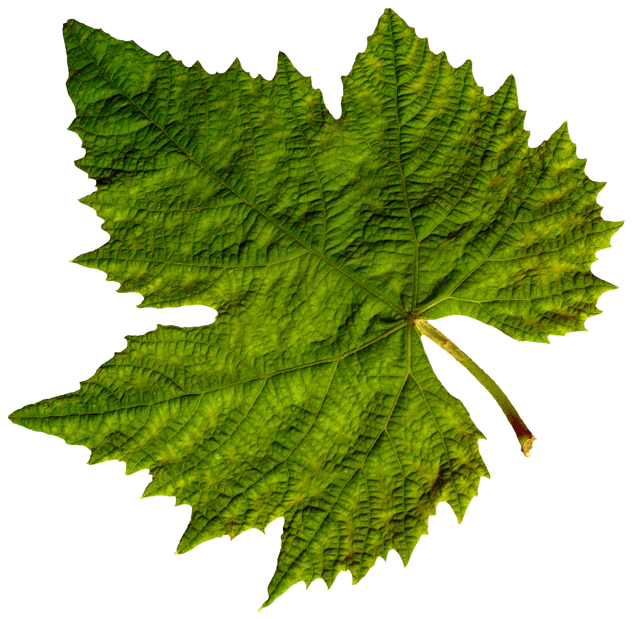 Corner Green Leaf transparent PNG.