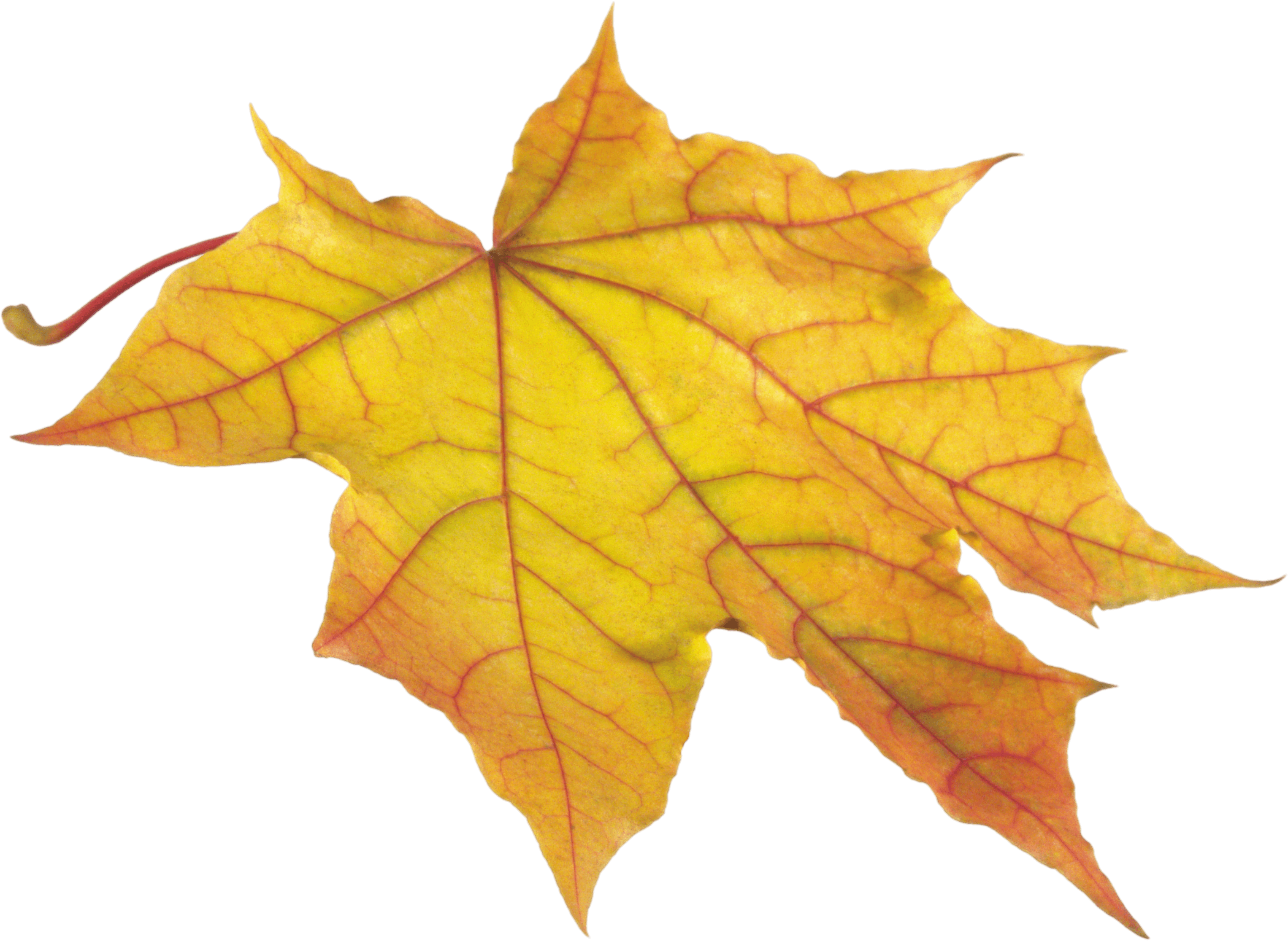 Download Autumn Leaves Free PNG photo images and clipart.