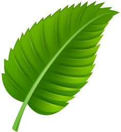 Tropical Leaf PNG Clip Art.