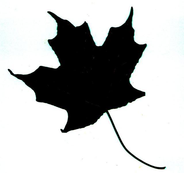 Leaf Silhouette.