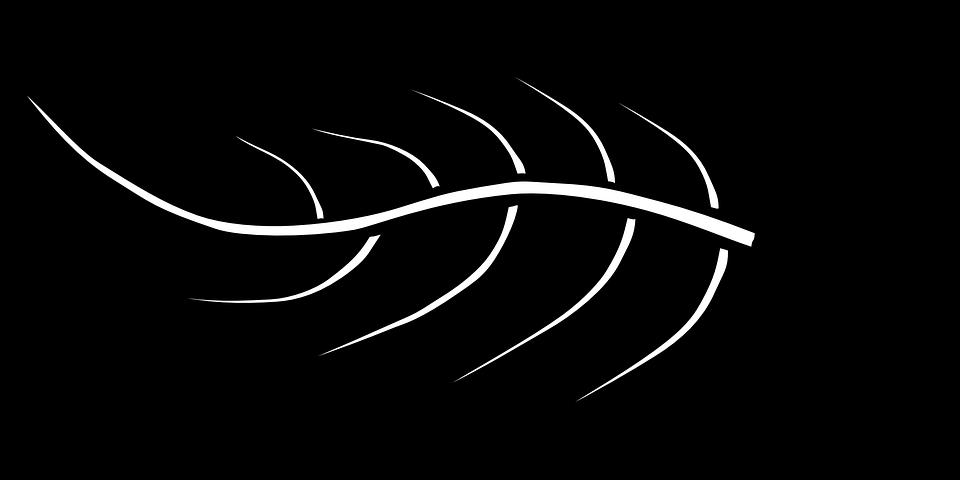 Free vector graphic: Leaf, Silhouette, Vegetation, Plant.