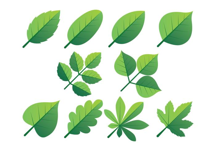 Green Leaves Clipart Set.
