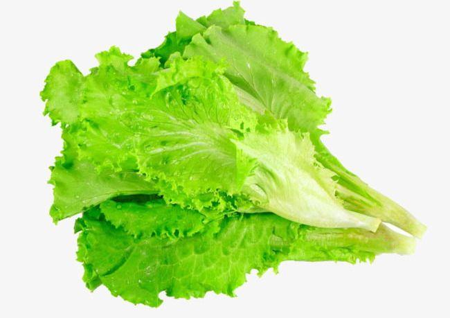 Lettuce Leaves Vegetables PNG, Clipart, Cooking, Ingredients, Leaves.