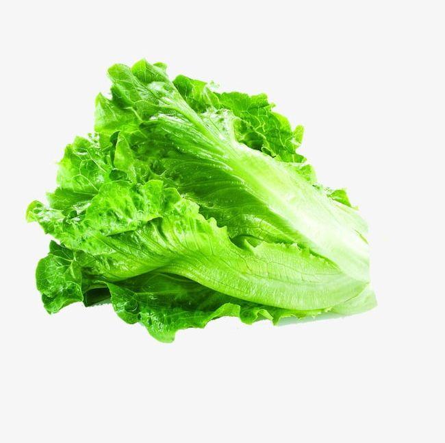Lettuce PNG, Clipart, Lettuce, Lettuce Clipart, Vegetables Free PNG.