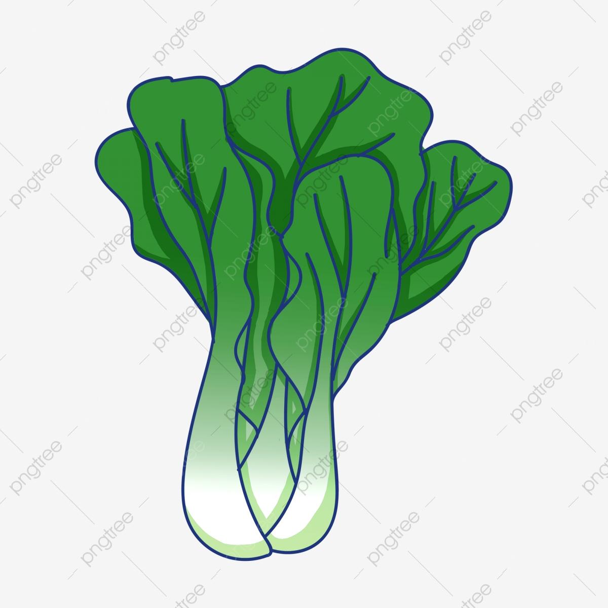 Lettuce Green Leafy Vegetables, Vegetables Clipart, Lettuce, Green.