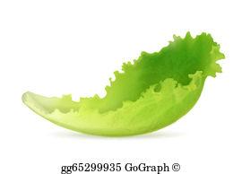 Lettuce Clip Art.