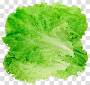 1,832 lettuce PNG clipart images free download.