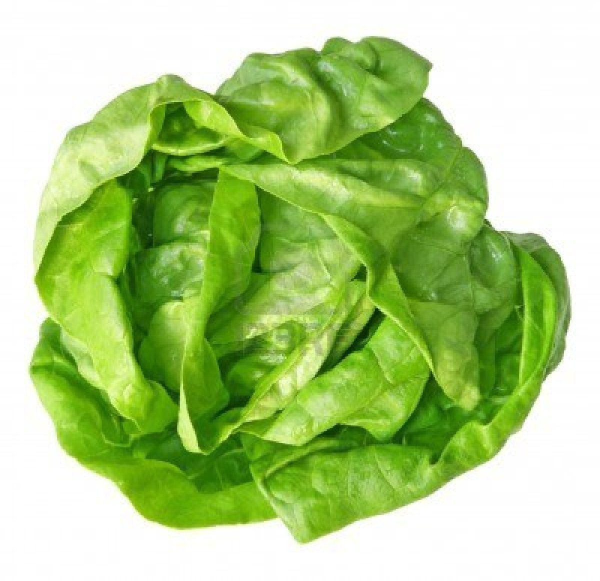 Lettuce free download clip art on clipart library.