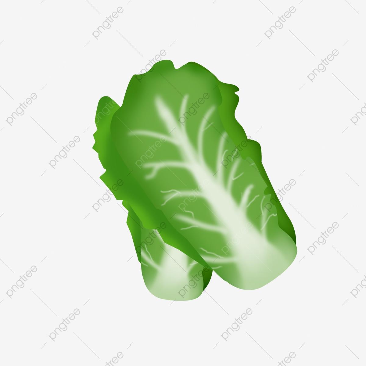 Lettuce Leaves Vegetables, Vegetables Clipart, Lettuce Leaves.