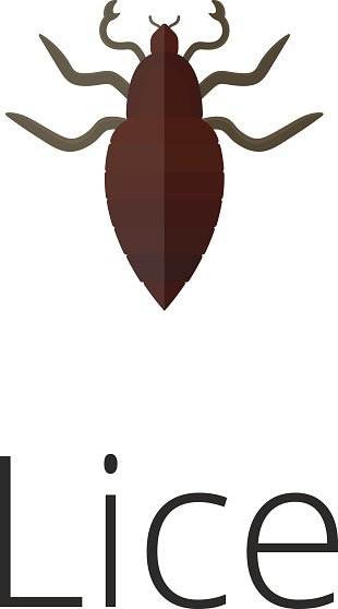 Lice Skin Parasite Insect Bug premium clipart.