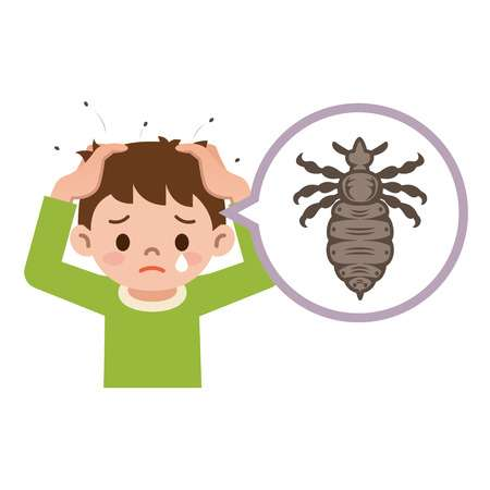 247 Head Lice Stock Vector Illustration And Royalty Free Head Lice.