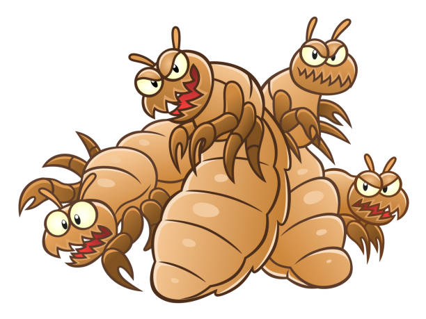 Best Lice Illustrations, Royalty.