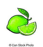 Whole and half unpeeled ripe pink grapefruit, sketch vector.