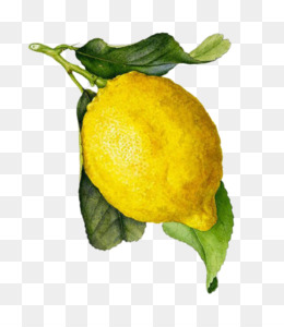 Limoncello PNG and Limoncello Transparent Clipart Free Download..