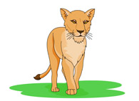 62+ Lioness Clipart.