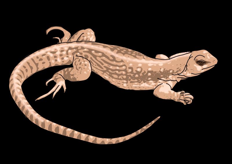 Free Clipart: Lizard.