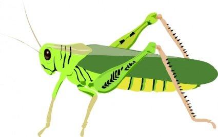 Grasshopper Locust Clipart Picture Free Download.