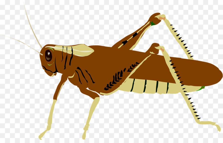 grasshopper clip art clipart Locust Clip art clipart.