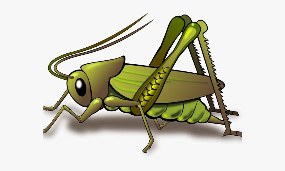 Locust Clipart Cricket Bug.