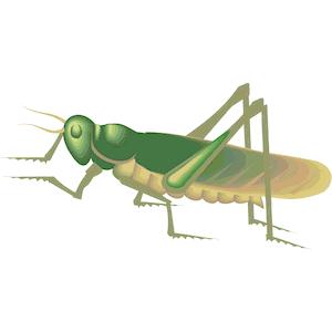Locust clipart, cliparts of Locust free download (wmf, eps.