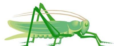 Locust Clip Art.