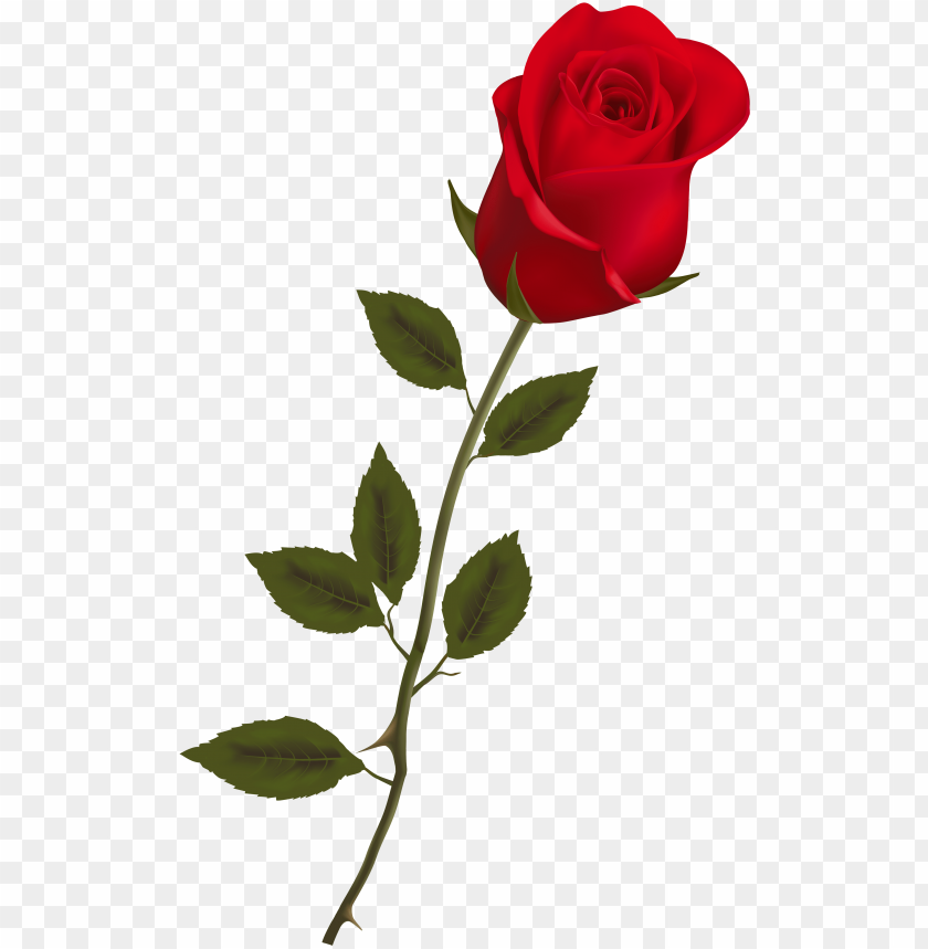 beautiful stem red rose png clipart.