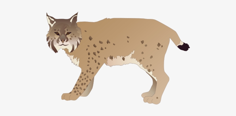 Lynx Png Cliparts.