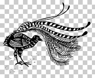 7 lyrebird PNG cliparts for free download.