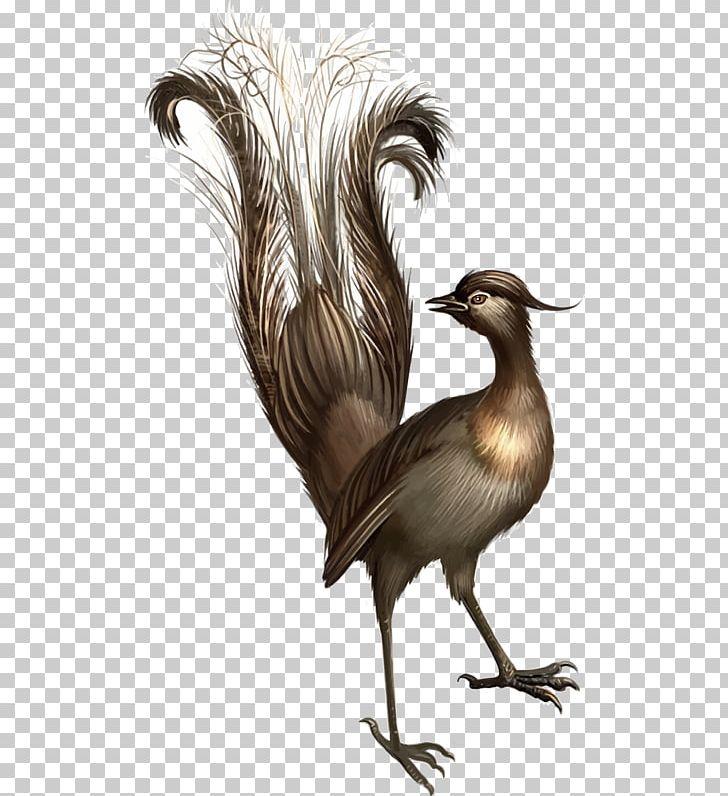 When The Lyrebird Calls Platypus Koala PNG, Clipart, Animals.