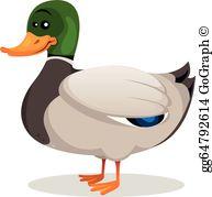 Mallard Duck Clip Art.