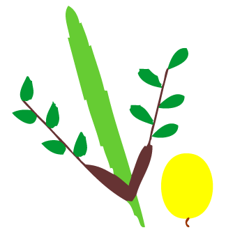 Lulav And Etrog Clipart at GetDrawings.com.