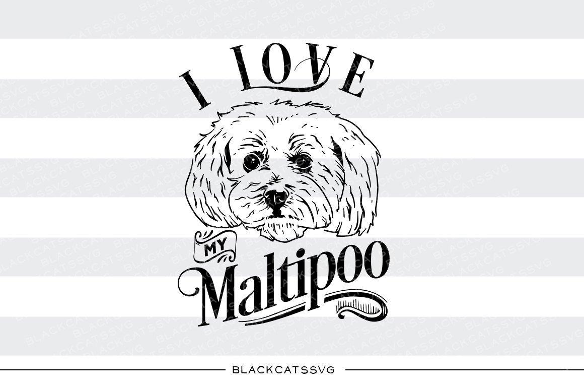 I love my Maltipoo.
