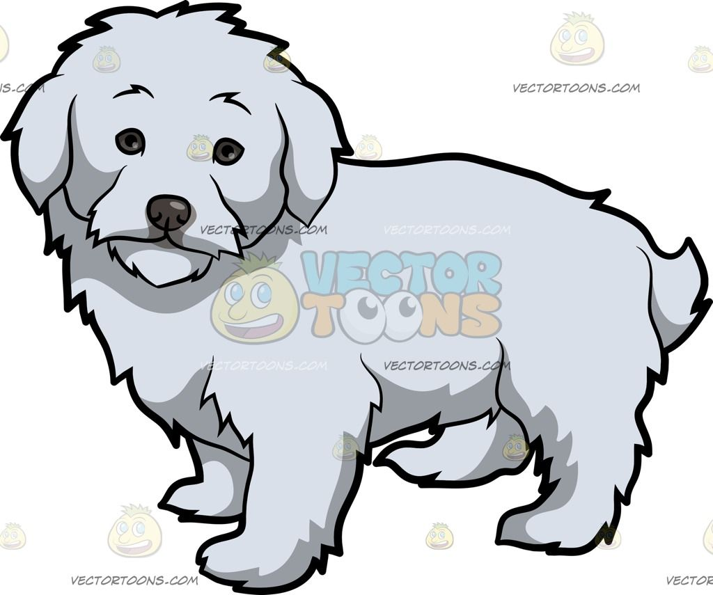 An Adorable Maltipoo Dog: A small dog with white fluffy coat.
