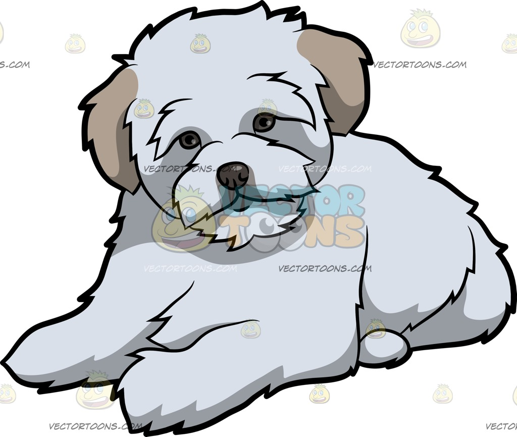 A Resting Maltipoo Dog » Clipart Station.