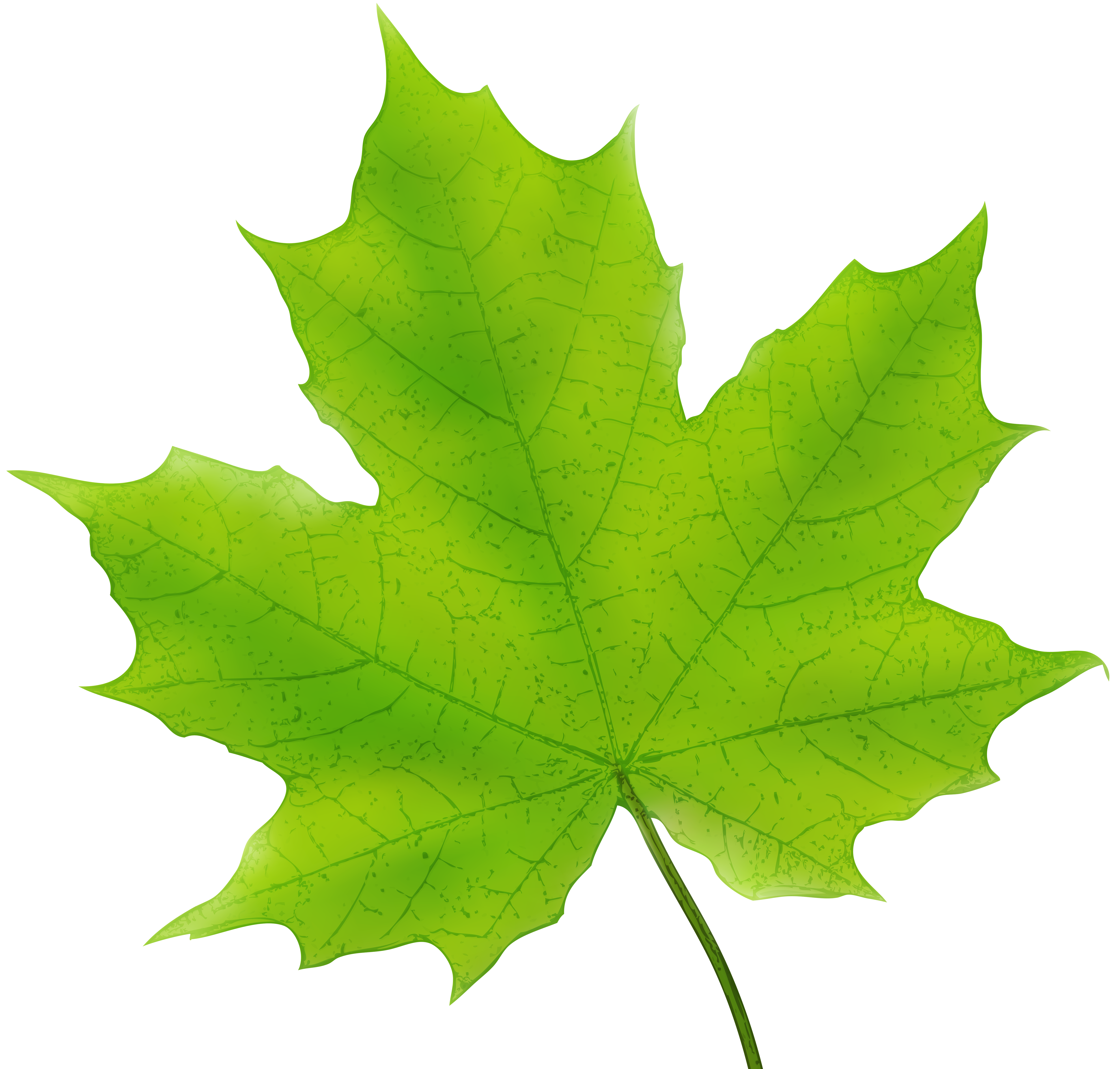Maple Leaf Green PNG Clip Art Image.