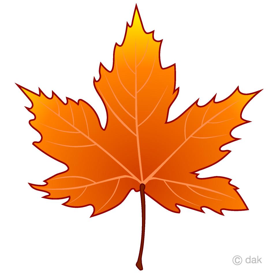 Orange Maple Leaf Clipart Free Picture|Illustoon.